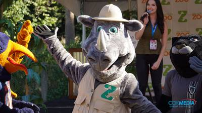 Introducing Cowboy, the San Antonio Zoo Mascot